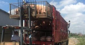 江苏海门濒临长江生态区规模猪场,于9月30日之前全部拆除
