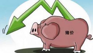 非洲猪瘟再增两例,多地猪价应声下跌
