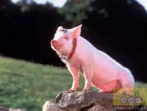 9月23日各地生猪价格