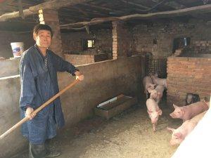 养猪15年从未亏本,他如何做到的?