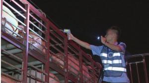 广东启用31个检查站监管生猪调运