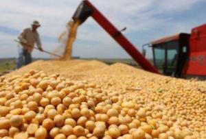 美国豆农期待特朗普总统能与中国达成协议