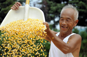 2018年国家临储玉米累计成交8648万吨