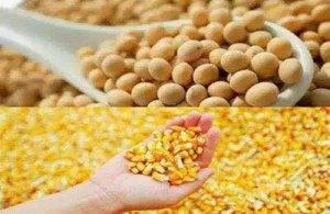 """""""玉米-大豆""""复合种植亩增400元"""