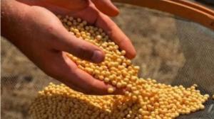 中国停购,美国达科他州大豆成了无家可归