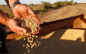 """中美贸易摩擦重塑大豆进口格局,倒逼国内养殖业消费""""降级"""""""