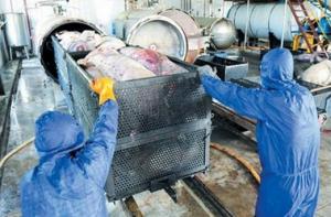 安乡县无害化处理2吨入境生猪产品