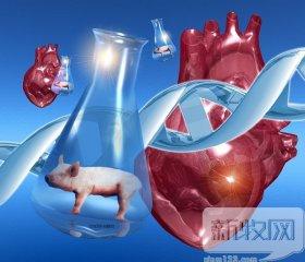 猪的心脏或可移植给人类,你能接受吗?