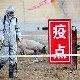 北京房山:3337头生猪已进行扑杀和无害化