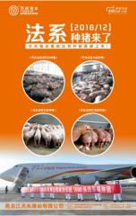 即将上市开售,天兆猪业法系种猪了解一下?