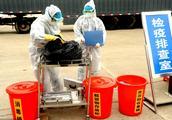 北京顺义排查出非洲猪瘟疫情,疫区猪全部扑杀!
