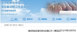 湖北省违规调运生猪无害化处理公示