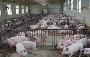 南方猪价现调整迹象