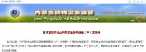 生猪压栏解决啦!内蒙古巴林左旗2家屠宰企业以高于市场价格收购