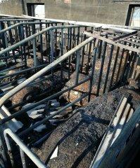养猪场突发大火100多头猪被烧死,起火原因竟是……
