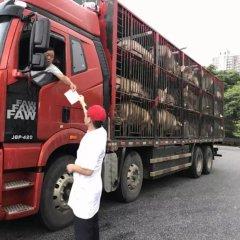 疫情爆发时,国外如何解决生猪调运问题?