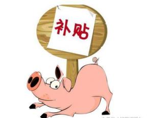 铜川千头以上生猪养殖场 最高可补贴40万元