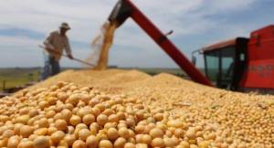 2018年中国累计进口大豆8803.1万吨,同比下降7.9%