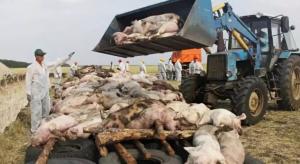 日本多地猪瘟蔓延,万余头猪将进行扑杀处理