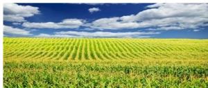中央一号文件发布:2019农业农村优先发展!