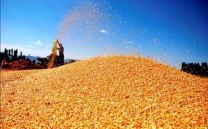 若达成协议,中国将购买2000万吨玉米、1000万吨小麦