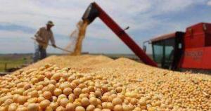 巴西农业部长:非洲猪瘟可能导致巴西大豆出口受损