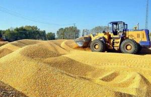 4月中国进口小麦22万吨、玉米66万吨