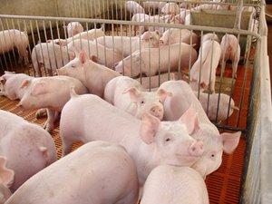 我国猪肉进口将继续增长,未来十年我国猪肉供给偏紧