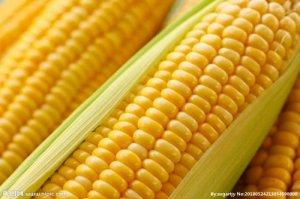 2019全国玉米减产,东北玉米必涨价