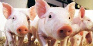 猪价持续大涨了,养猪的你又开始心痒了?