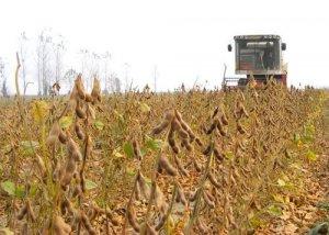 豆粕日报:报告利多已提前消化 豆粕窄幅涨跌