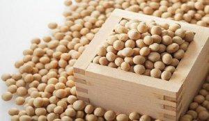 豆粕日报:豆粕报价稳定 等待报告指引