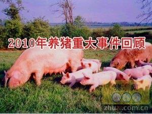 [周]2010年养猪业重大事件回顾