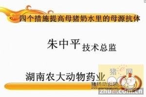 朱中平:四个措施提高母猪奶水里的母源抗体