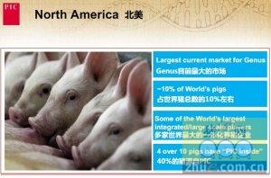 视频: 北美规模化养猪生产概述