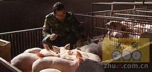[周]全国将迎来新一轮区域猪价调整