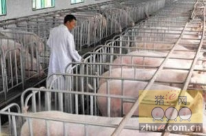 [周]四川泸州将新建设大型养猪场