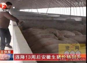 连降13周后安徽生猪价格回升