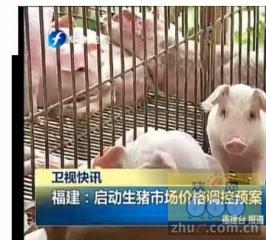 福建:启动生猪市场价格调控预案