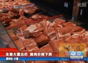 生猪大量出栏 猪肉价格下跌