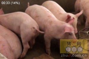 海博莱猪伪狂犬疫苗的无针稀释体系