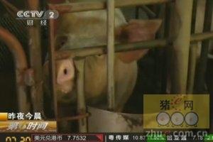 商务部向农业部移交生猪屠宰监管职责