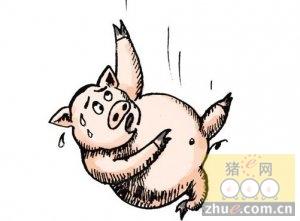 [周]农业部:2月生猪及能繁母猪存栏再降