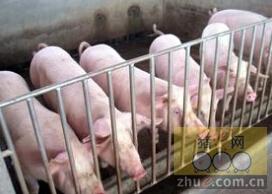 [周]当前威胁养猪业的主要疾病