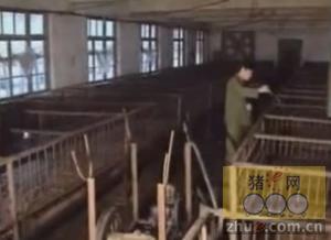 2015生态养猪技术大全(养猪场疾病)