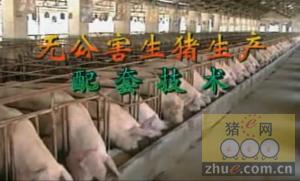 无公害生猪生产配套技术