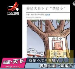 """山东临沂:养猪大县""""禁猪令"""""""