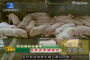 高架网床养猪模式