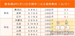 猪易通app01月11日各地外三元价格一览图