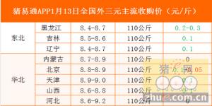 猪易通app01月13日各地外三元价格一览图